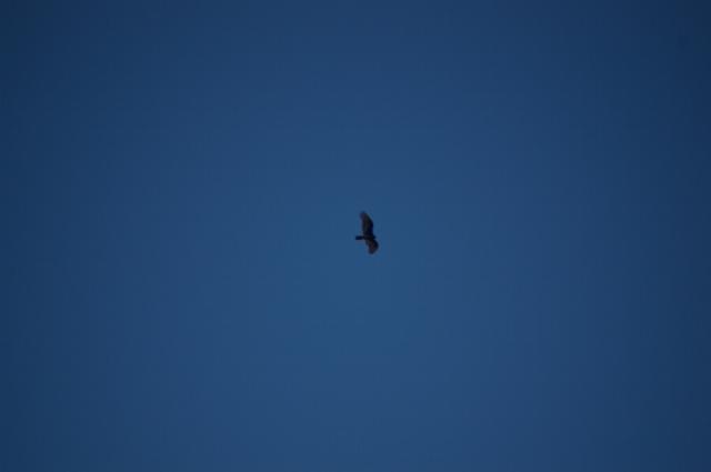 just-flying-oct-21-2007-45