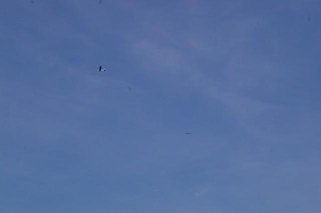gliders-june-20-2010-31