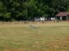 gliders-june-20-2010-35