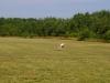 gliders-june-20-2010-39