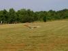 gliders-june-20-2010-67