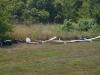 gliders-june-27-2010-05