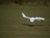 john-bogdon-canard-maiden-flight-oct-2008-22