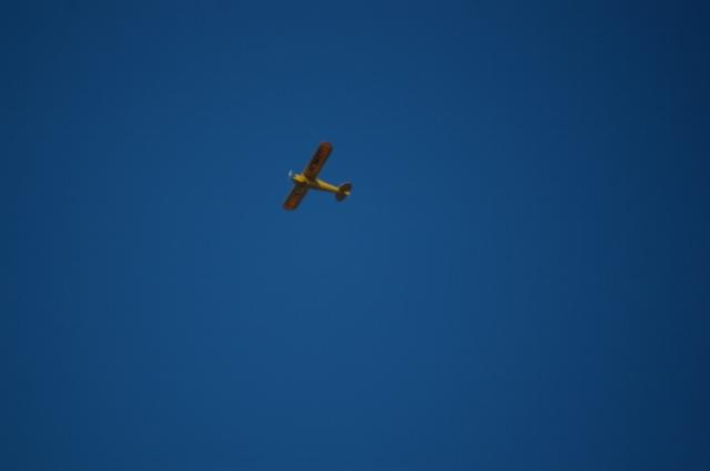 jims-cub-sept-1-2008-11