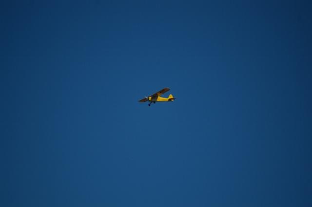 jims-cub-sept-1-2008-15