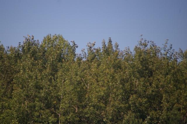 flying-sept-7-2008-53