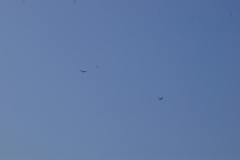 Gliders 6-27-2010